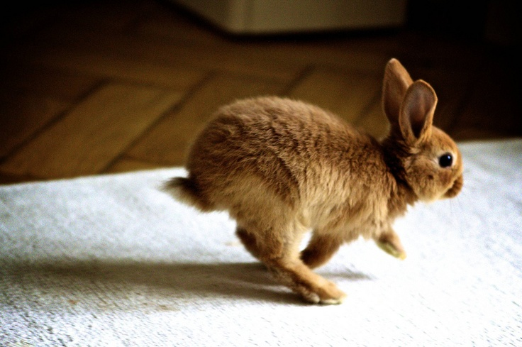 Bunny Bounce Rate