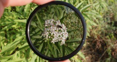 camera filter over a flower